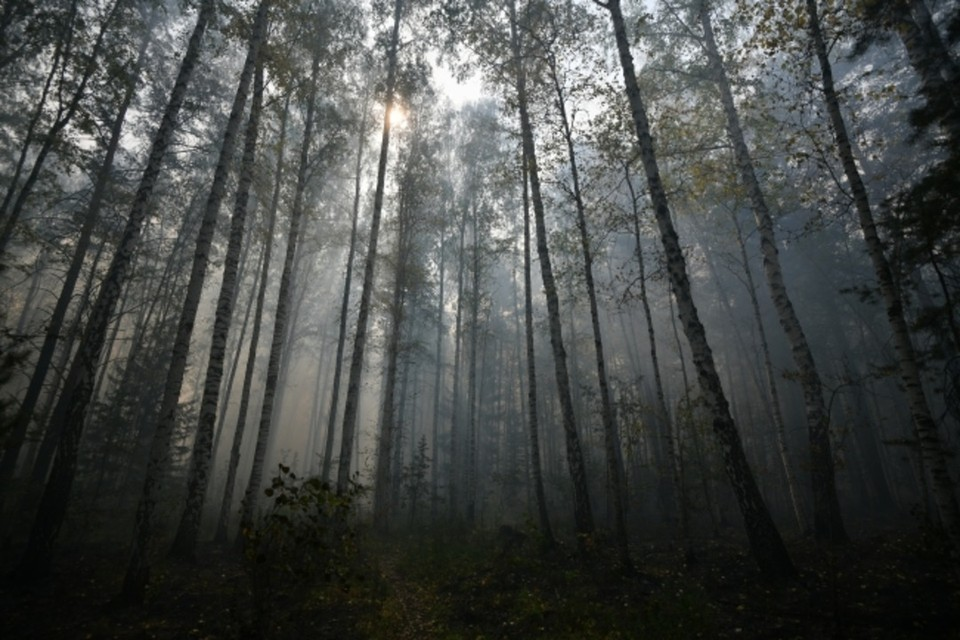Тело мужчина сжег в лесу. Фото: Архив «КП»
