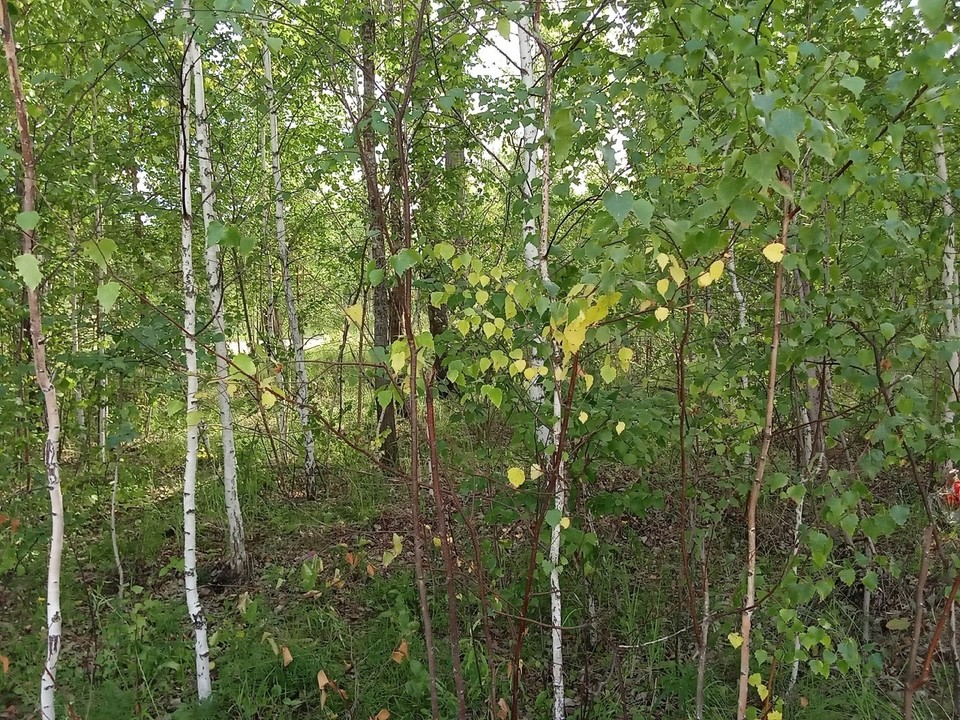 Погода на Ямале на 10 сентября.