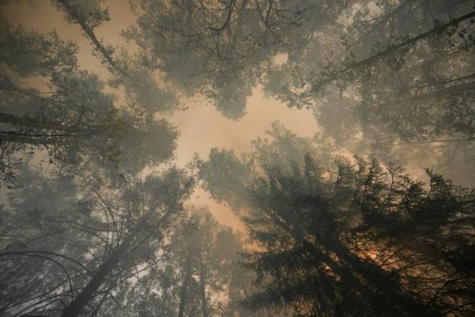 Опасность природных возгораний в районе сохраняется несмотря на осеннюю погоду